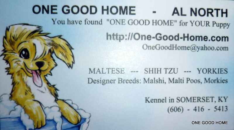 ONE GOOD HOME: We Care for YOU and YOUR Puppy  MOBILE USERS